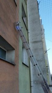 ochrona budynku przed ptakami