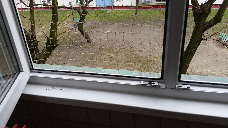 siatka na kota okno