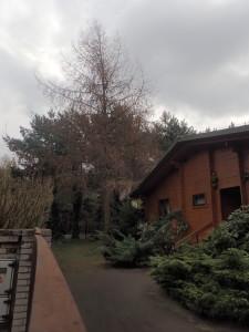 Ścinanie drzew Łódź