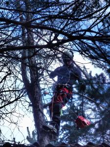 wycinka drzew Łódź